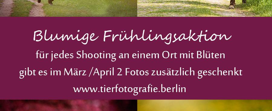 Aktion im Frühling – 2 Fotos geschenkt bei allen Blütenshootings