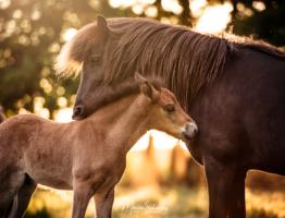 Workshop Pferdefotografie für Einsteiger am Sonntag 16. August 2020  auf Islandpferdegestüt Faxabol bei Berlin
