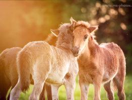 Tierkinder-Angebot 50% Rabatt bis Juni 18