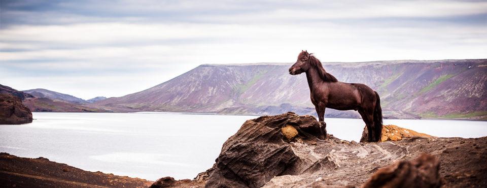 Island 2017 – von wunderbaren Pferde, einmaliger Natur und Enttäuschungen